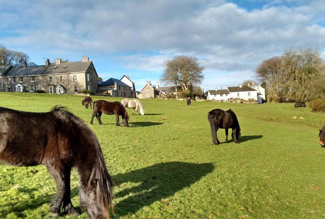 Ponies on the Green